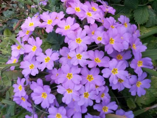 https://ikizkare.com/Mart çiçeği