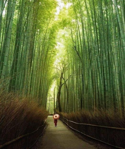 https://ikizkare.com/Bambu Hakkında Bilgi